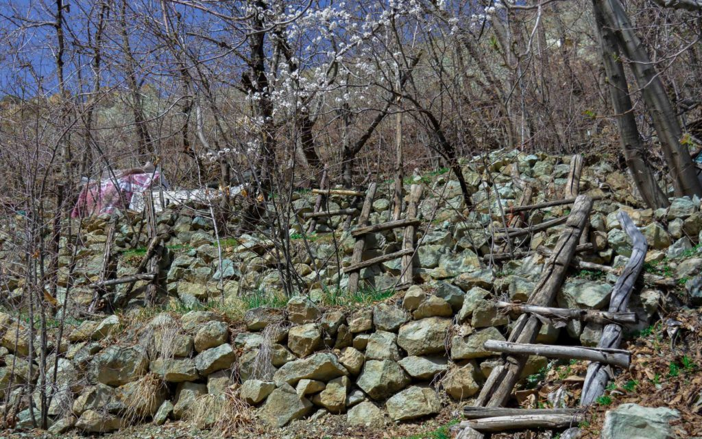 Multiple fruit gardens start blossoming in mid-April-May
